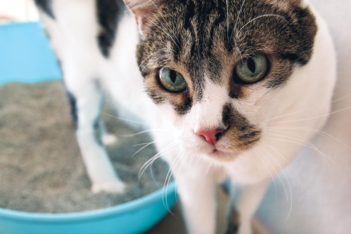 Rüyada Yavru Kedi Kakası Görmek