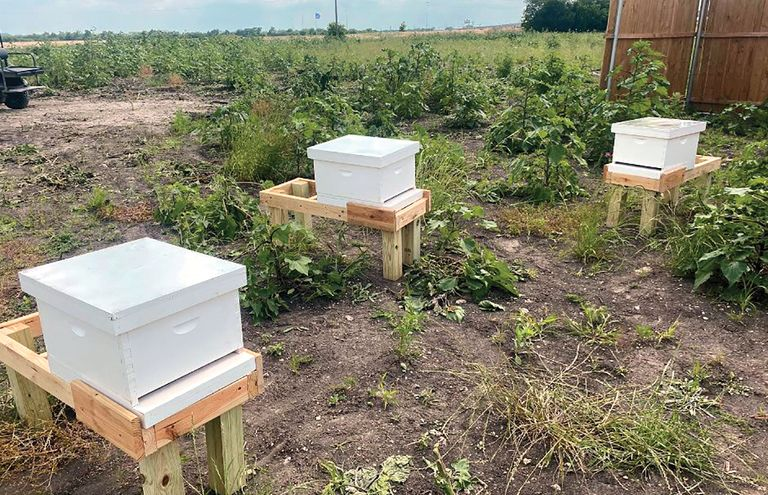 Medical City McKinney sweetens campus with beehives