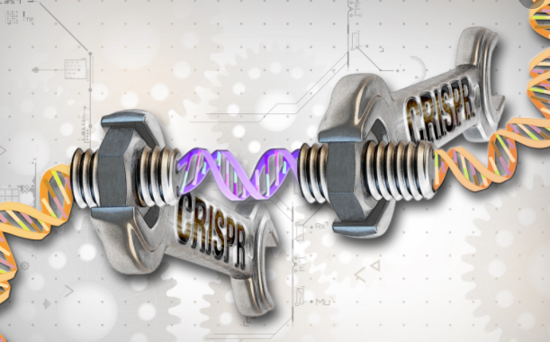 CRISPR screen could help identify treatments for COVID